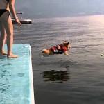 【なごみ動画】臆病コーギーの海へのダイブがカワイすぎて・・・www